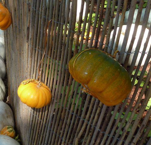 DallasArboretum-Pumpkins-08 copy
