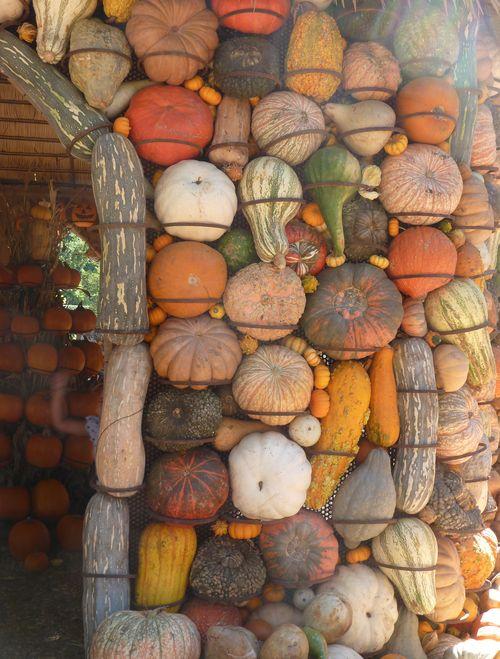 DallasArboretum-Pumpkins-07 copy