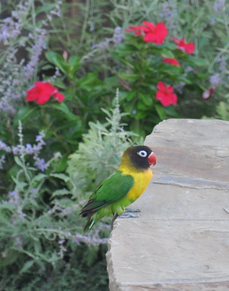 Parrot-02