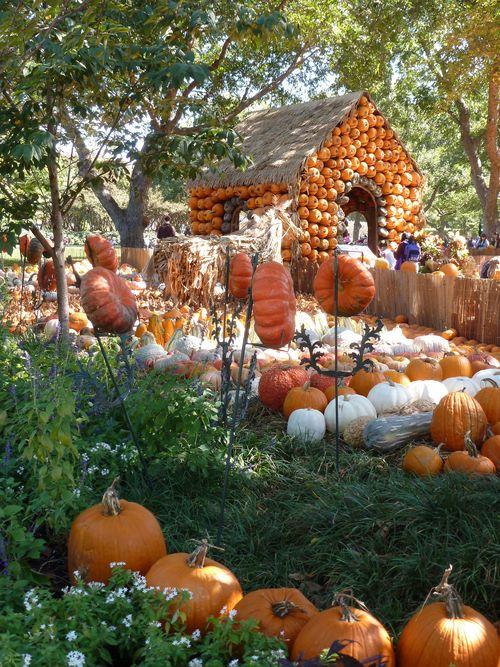 DallasArboretum-Pumpkins-04 copy