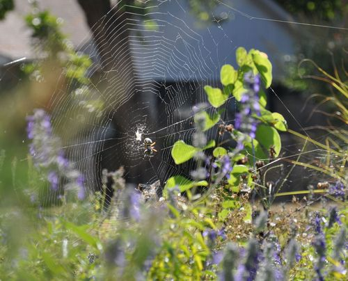 Spider-August2013-1 copy