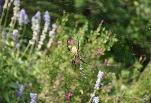 Spider-August2013-4