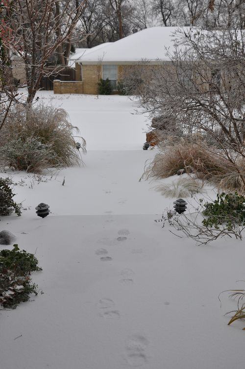 Icestorm-1